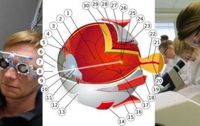 Vorbereitungslehrgang Augenoptik